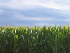 Will the SJ general plan help preserve farmland? (Courtesy Michele Valentinuz)